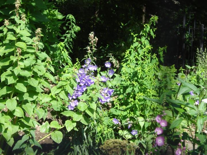 Flowers_inthe_Timelandscape